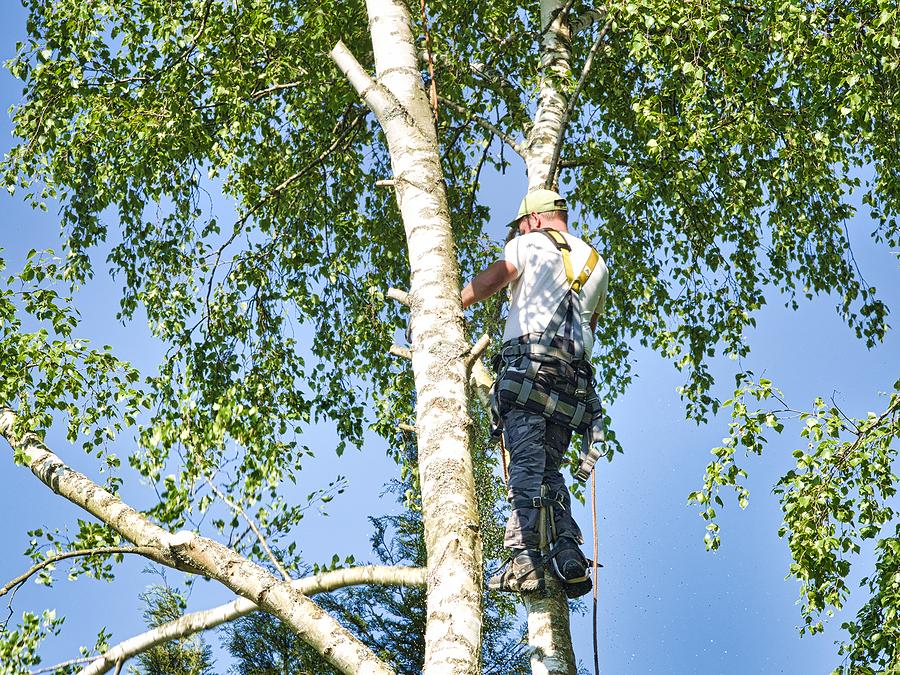 man climbs the tree